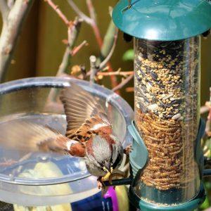 Hoe Houden De Vogels In De Zomer Zich Koel